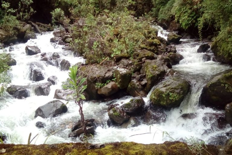 Colombia cuenta con el 50% de los ecosistemas de páramo en el mundo. Foto: Corpoboyacá.