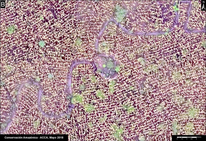 Deforestación por cultivos de maíz en Madre de Dios. Foto: Conservación Amazónica - ACCA.