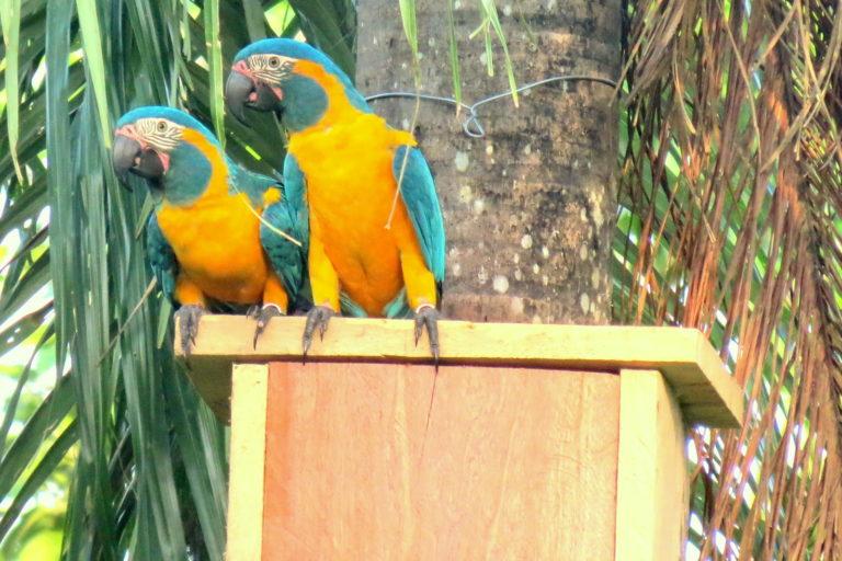 La Reserva Paraba Barba Azul Laney Rickman cuenta con nidos artificiales. Foto: Asociación Armonía.