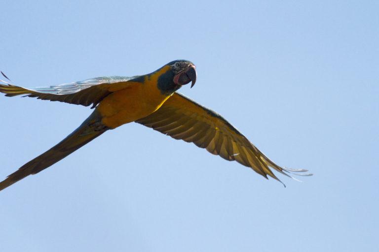 La observación de aves es un proyecto de turismo que se implementará en la nueva reserva. Foto: Asociación Armonía.