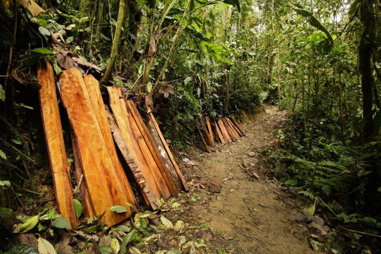 Algunos de los impactos del proyecto Llurimagua en el bosque de Junín. Foto: DECOIN.