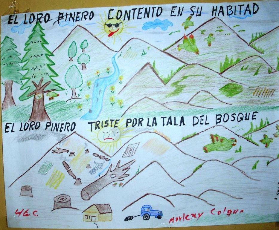 En Quirusillas se realiza un festival anual en honor al loro pinero. Foto: Proyecto de Conservación del Loro PInero.