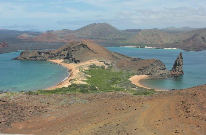 Hay una gran variedad de plantas, animales, o patógenos que han sido introducidos en Galápagos. Algunas especies son invasoras. Fotografía: Gabriela Erazo / WWF-Ecuador