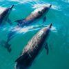 """En la pesca de arrastre caen cientos de peces en la llamada """"pesca incidental"""", los delfines pueden ser algunos de ellos. Foto: Pablo Heimplatz."""