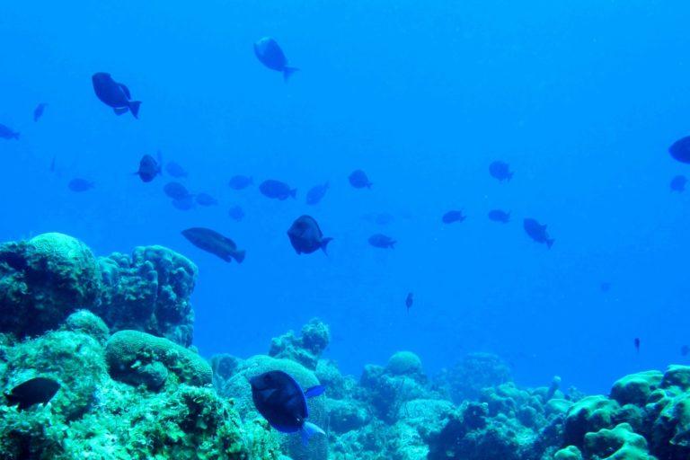 La acidificación de los océanos daña la salud de los ecosistemas marinos. Foto: Comisión Colombiana del Océano (CCO).