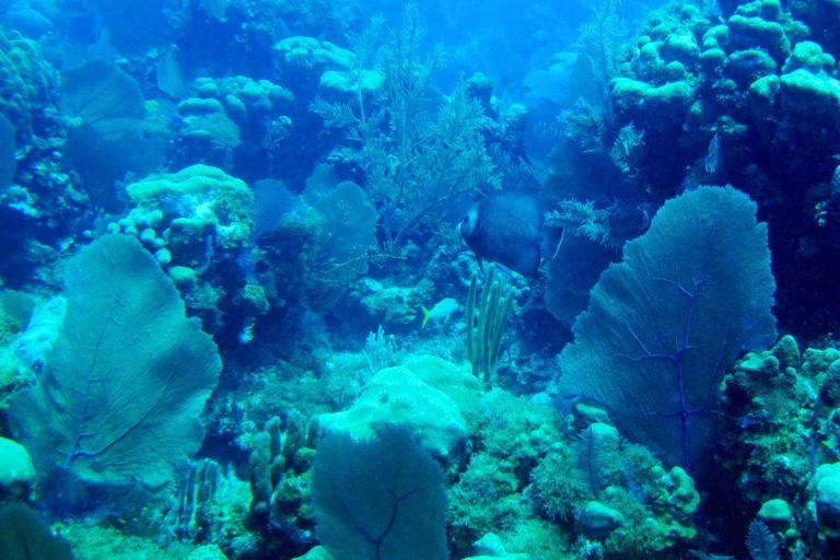 Los océanos también se benefician con el polvo que llega del Sahara. Foto: Comisión Colombiana del Océano (CCO).