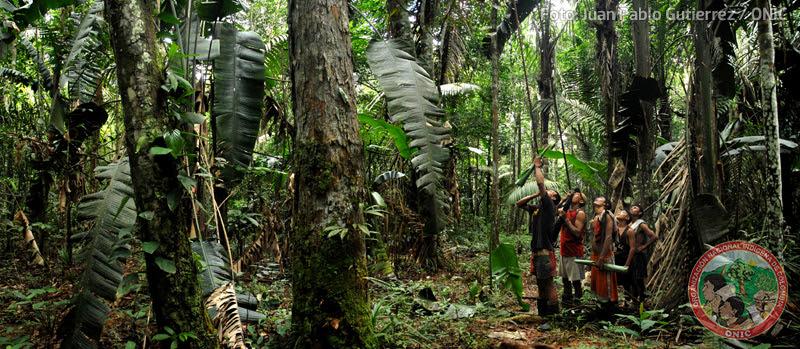 Los Nukak y los Jiw viven en las espesas selvas amazónicas del Guaviare. Foto: Juan Pablo Gutiérrez / ONIC.