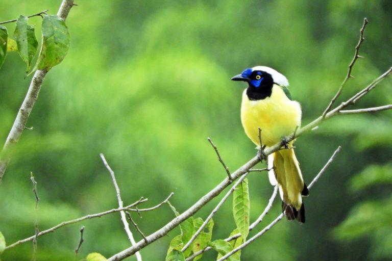 Los bosques secos del Marañón albergan alrededor de 65 especies de aves, muchas de ellas endémicas. Foto: Naturaleza y Cultura Internacional.