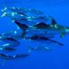 Diferentes stocks pesqueros dependen, en determinadas etapas de sus ciclos biológicos, de ecosistemas que se ubican en alta mar. Foto: Greenpeace.