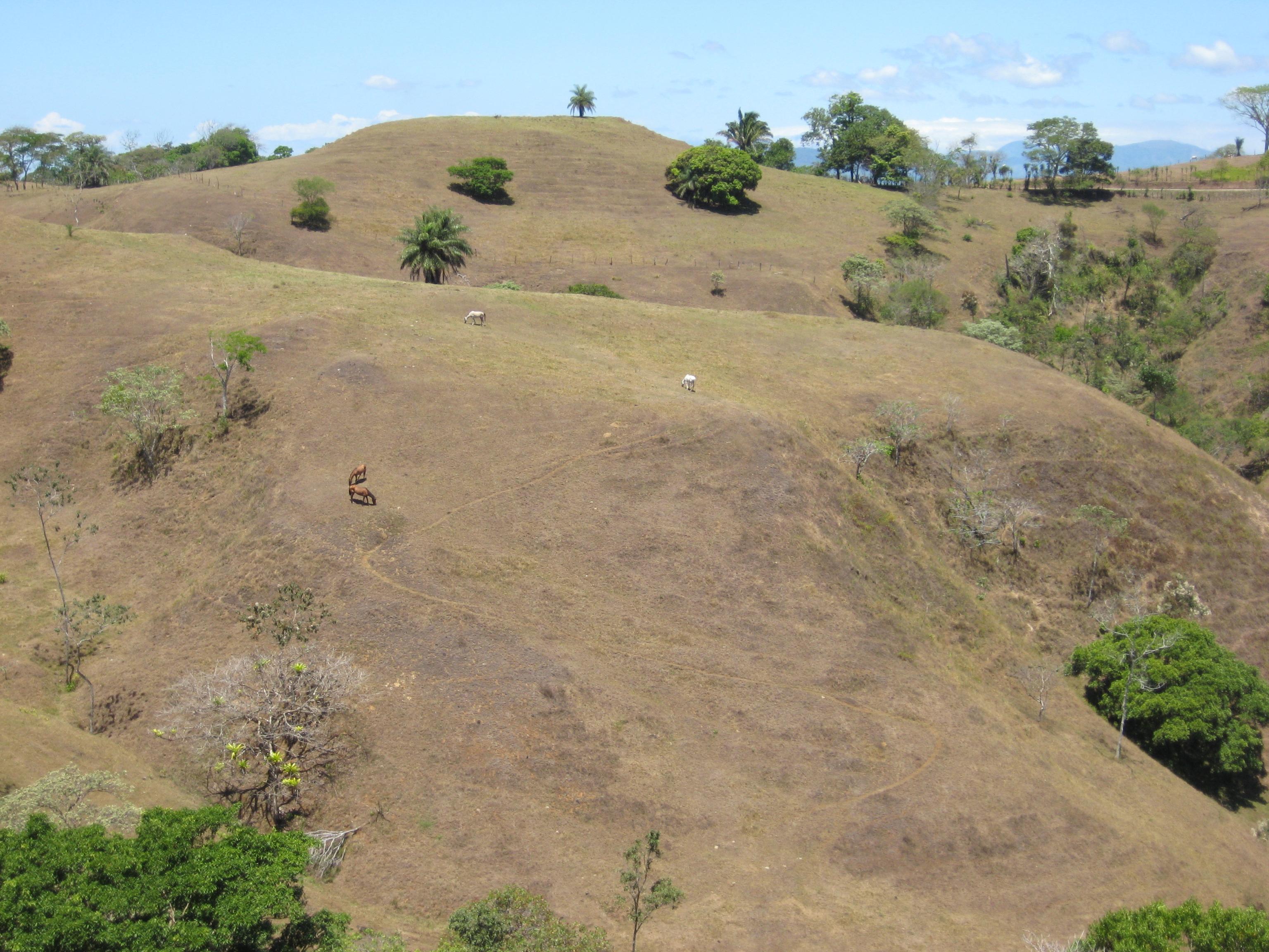 Los impactos de la ganadería en zonas de alta pendiente son evidentes. Suelen ser un factor de degradación de suelos. Foto: Andrés Zuluaga.