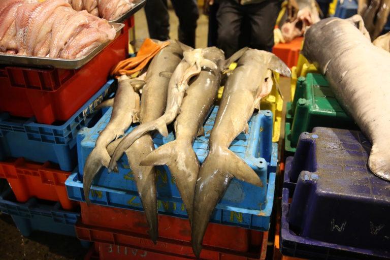 El tiburón se comercializa en puestos y mercados bajo el nombre común de tollo. Foto: Oceana.