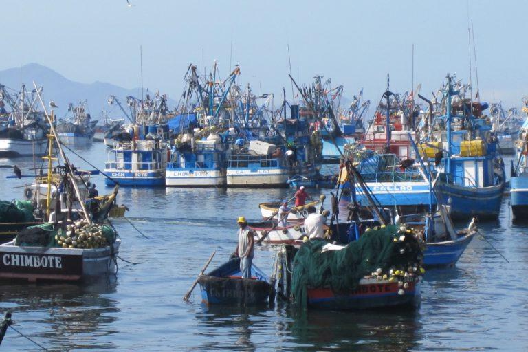 Desafíos 2020 Peru La sobrepesca y la pesca ilegal afectan la biodiversidad del mar peruano. Foto: Oceana.