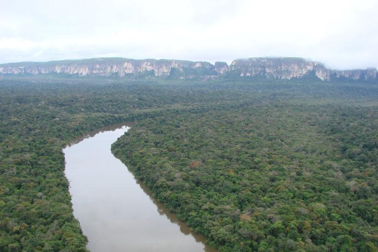 Chiribiquete cuenta con con especies propias de la Amazonía pero también con otras de la Orinoquía y hasta de los Andes colombianos. Foto: ©LG Naranjo/WWF Colombia