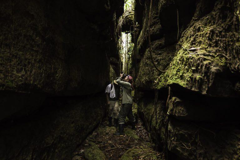 La flora y la fauna que los investigadores encuentran en Chiribiquete es totalmente diferente en los bosques de tierra firme y en las mesetas de los tepuyes. Foto: Parques Nacionales Naturales de Colombia.