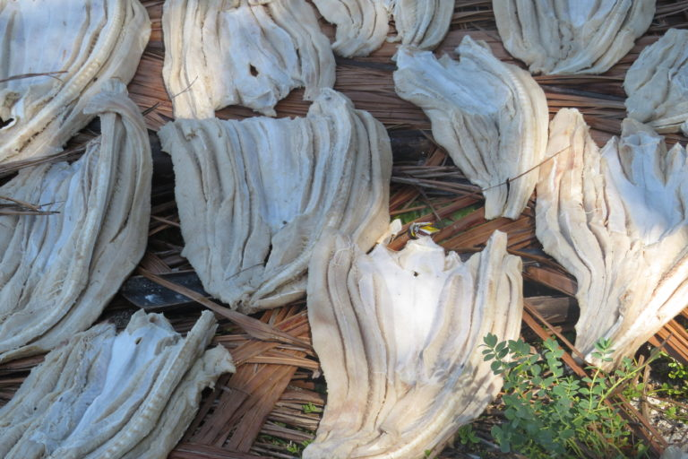 Salted and dried shark meat known as cecina. Image courtesy of MarAlliance.