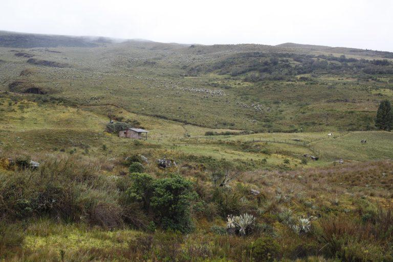 Las comunidades que viven en el páramo de Pisba han reclamado porque no fueron tenidas en cuenta en la delimitación. Foto: Daniel Reina Romero-Semana Sostenible.