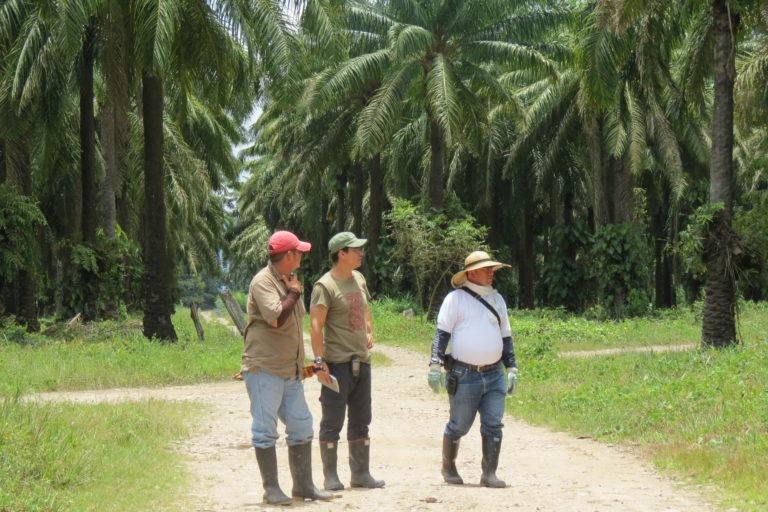 Lain Pardo y otros investigadores en medio de un cultivo de palma en el departamento del Meta. Foto: Lain Pardo.