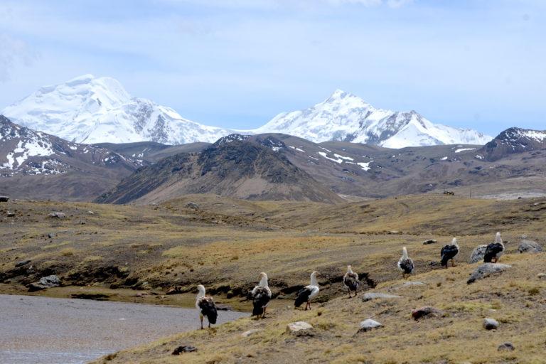 La entrega de concesiones mineras dentro de territorio solicitado como Área de Conservación Regional Ausangate fue uno de los principales obstáculos para su creación. Foto: Yvette Sierra Praeli.