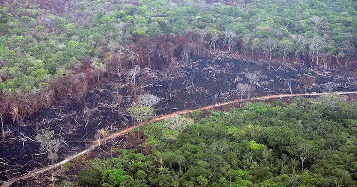 Deforestación en el departamento del Guaviare. Foto: FCDS.