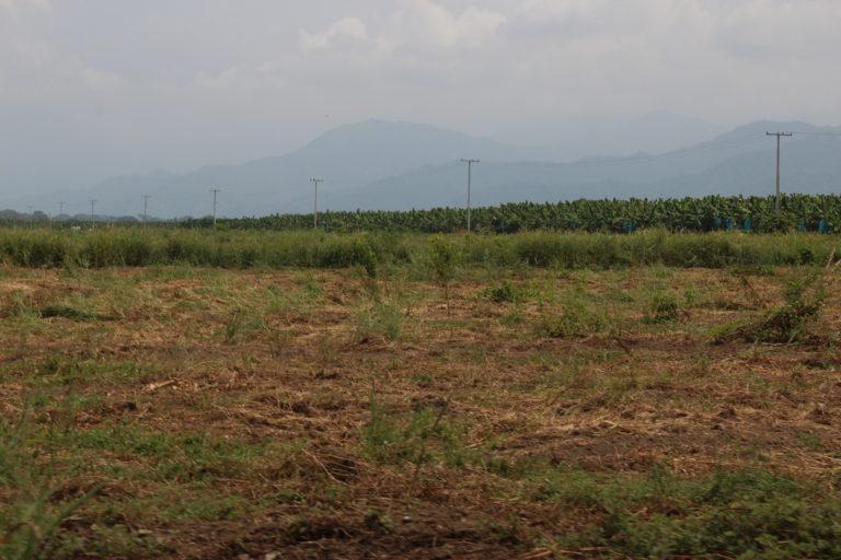 Zona deforestada, seguida de plantaciones de banano y al fondo las montañas de la Sierra Nevada de Santa Marta. Foto: Alejandro Ballesteros.