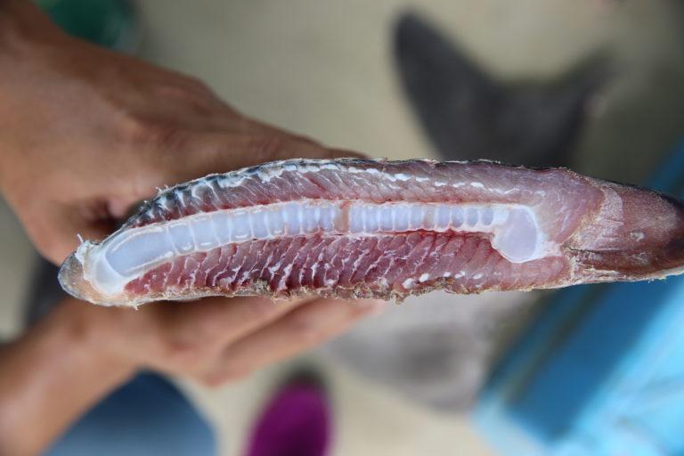 Un kilo de aletas de tiburón cuestan 20 ó 30 veces más que la misma cantidad de otra parte del cuerpo del animal. Foto: Oceana.