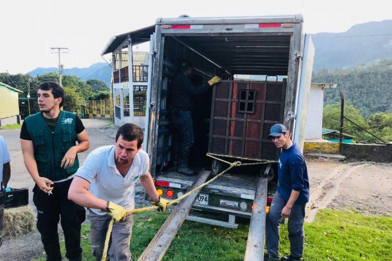 Luego de 8 horas de viaje, Raymi es bajado del camión. Foto: Fundación Zoológico Santa Cruz.