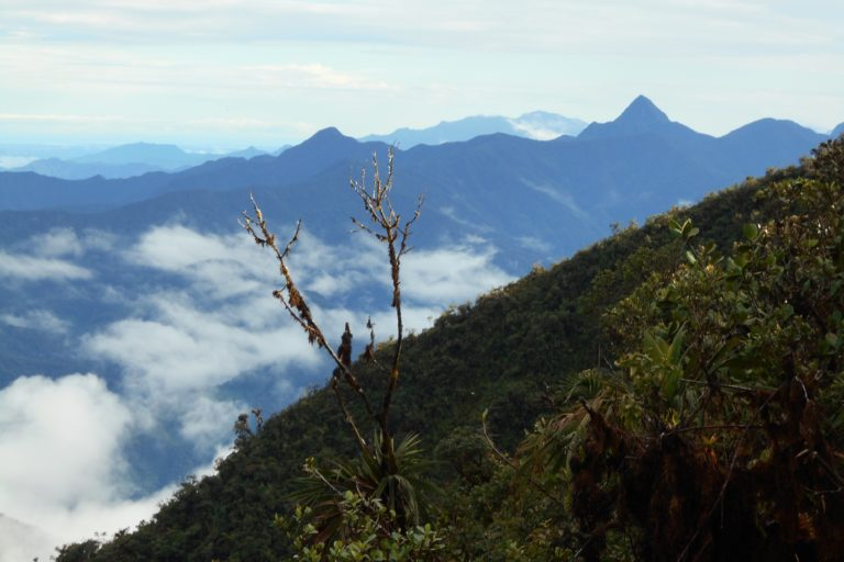 La creación del Parque Nacional Natural Munchique se oficializó en 1977 tras comprobar las altas biodiversidad y endemismo asociadas a su amplio rango altitudinal, que va de los 600 a los 3000 metros sobre el nivel del mar, y a su estratégica ubicación en el Chocó biogeográfico caucano. Foto: Claudia Acevedo / Parques Nacionales.