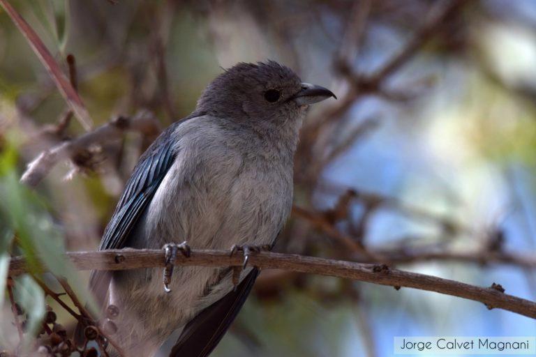 Bolivia alcanzó el cuarto lugar en el ranking mundial de avistamiento de aves. Foto: Jorge Calvet Magnani.