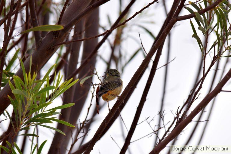 Los campeonatos mundiales de avistamiento de aves ha despertado el interés por la naturaleza en Bolivia. Foto: Jorge Calvet Magnani.