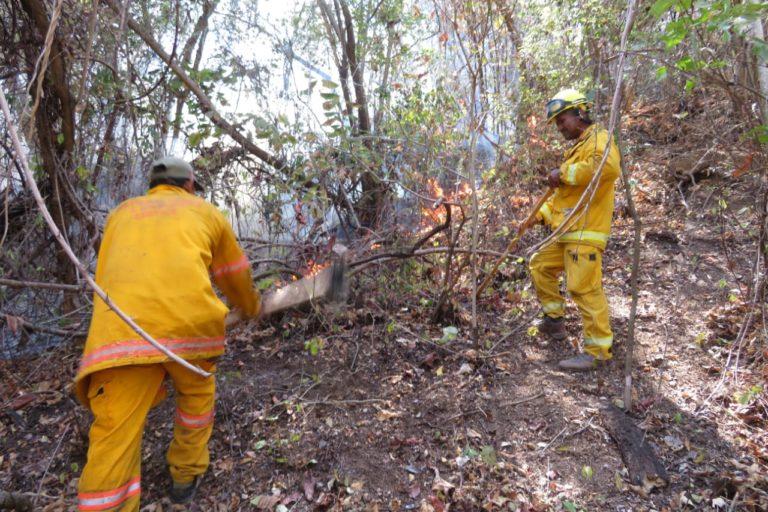 Más de una semana tomó apagar el fuego en la Reserva Nacional de Tumbes. Foto: Sernanp.