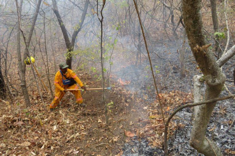 Guardaparques de cuatro áreas protegidas acudieron al incendio de la Reserva Nacional de Tumbes. Foto: Sernanp.