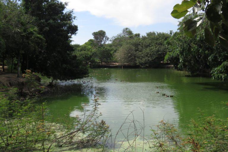 Lago de aves migratorias. Foto: María Fernanda Lizcano.