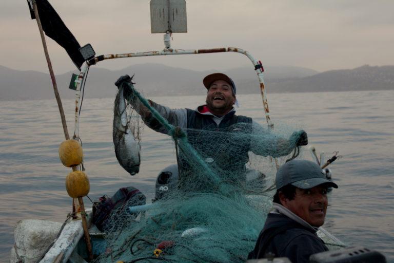 Pescadores artesanales pescando merluza. El único ejemplar adulto pescado en la jornada de trabajo. Foto: Michelle Carrere