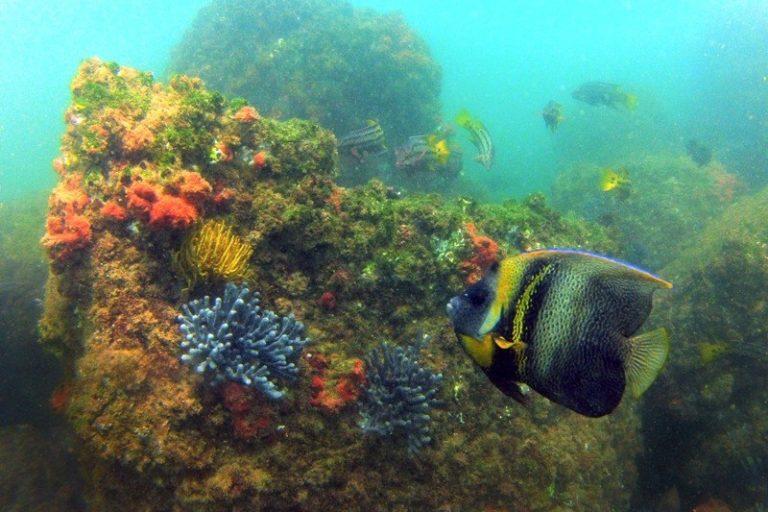 El mar del norte de perú posee una biodiversidad única, por ello, se ha propuesto su categorización como zona reservada. Foto: Yuri Hooker.