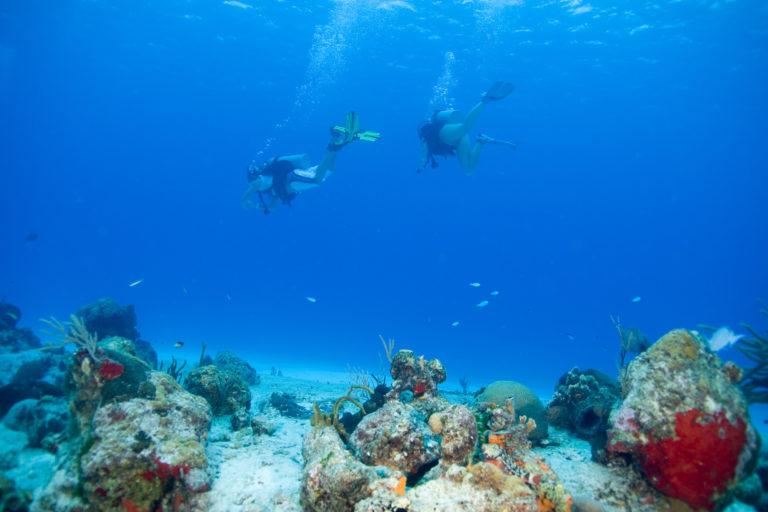 Los arrecifes de coral son ecosistemas altamente biodiversos. Foto: AIDA.