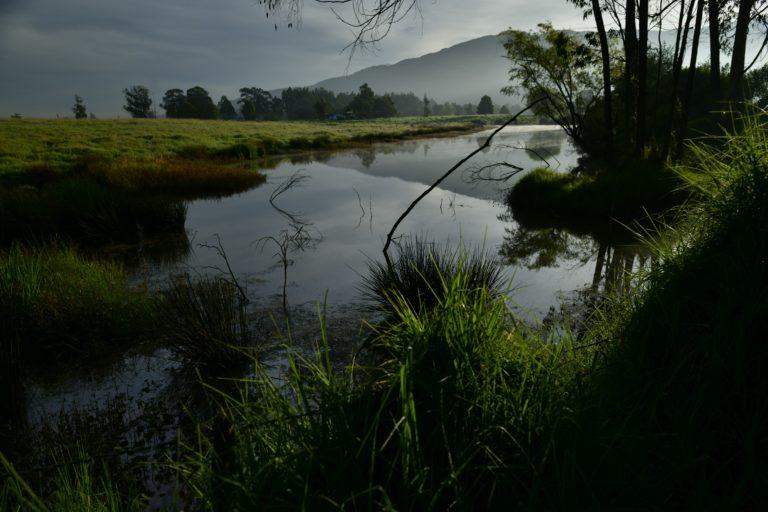Paisaje dentro de la reserva Thomas Van der Hammen. Foto: Andrés Ángel.