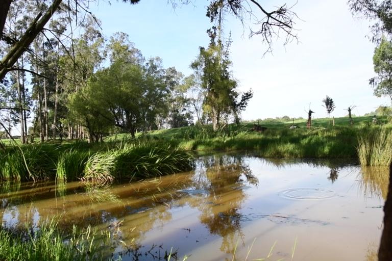 La reserva Thomas Van der Hammen está penada como una reserva productora, donde la conservación y restauación ecológica es compatible con otros usos del suelo. Foto: Cortesía Sapiens.