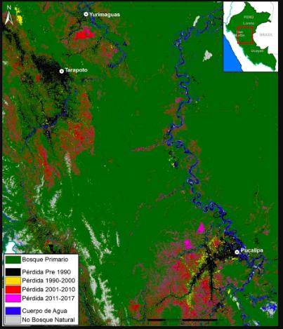 Desde el año 2000, un total de 344 000 hectáreas de bosques primarios fueron arrasados en Ucayali. Fuente: MAAP.