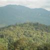 Con Monte Puyo suman 14 áreas de conservación privadas en la región Amazonas. Foto: Daniel Lebbin / American Bird Conservancy