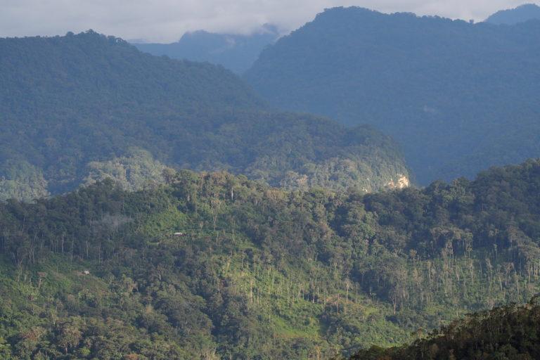 La nueva Área de Conservación Privada Monte Puyo protegerá los bosques nublados de la región Amazonas. Foto: Daniel Lebbin / American Bird Conservancy