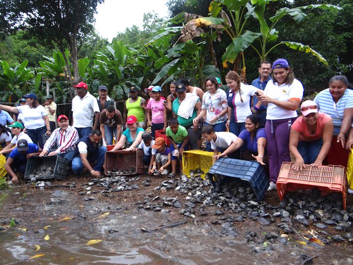 Liberación de tortugas en el río Caura. Foto: FUDECI.