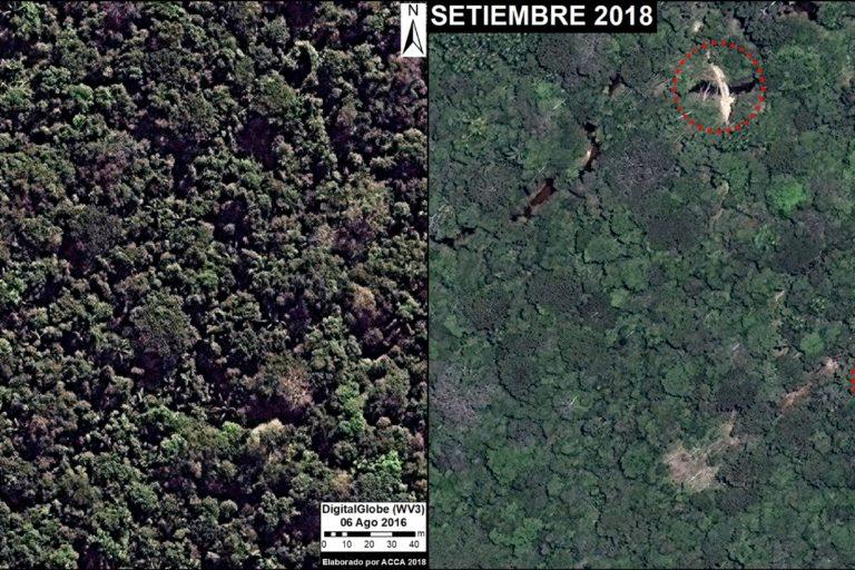 Fotos que muestran, con una diferencia de dos años, un sector del bosque donde se abrió un camino forestal ilegal. Fuente: DigitalGlobe / MAAP.