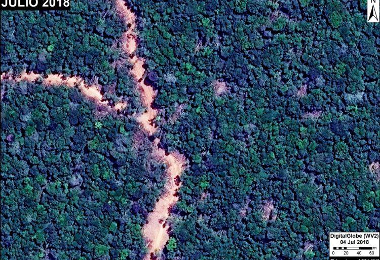 Imágenes satelitales permiten observar un camino forestal habilitado en la región Ucayali. Fuente: DigitalGlobe / MAAP.