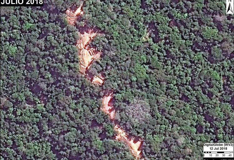 Tala selectiva en un área de aprovechamiento forestal en Ucayali. Fuente: DigitalGlobe / MAAP.