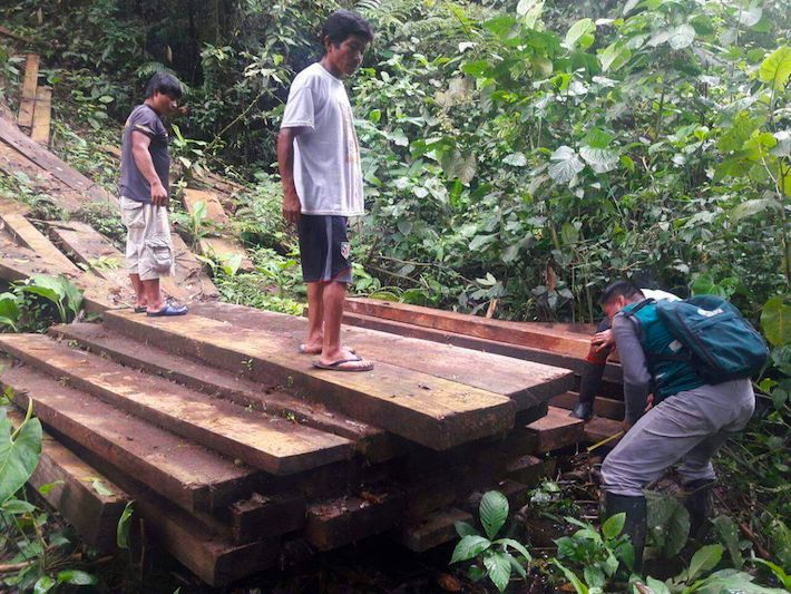 Madera incautada a los taladores ilegales. Foto: Serfor.