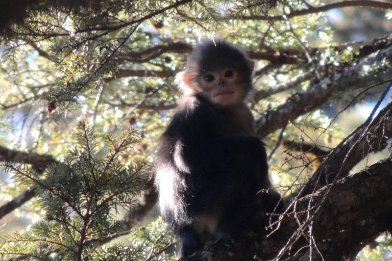 Un mono sin nariz bebé. Imagen de Dong Shaohua