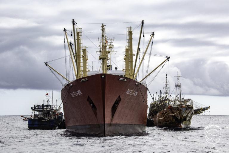Muchas embarcaciones chinas llegan al mar peruano en busca del calamar gigante. Foto: Simon Ager / Sea Shepherd.