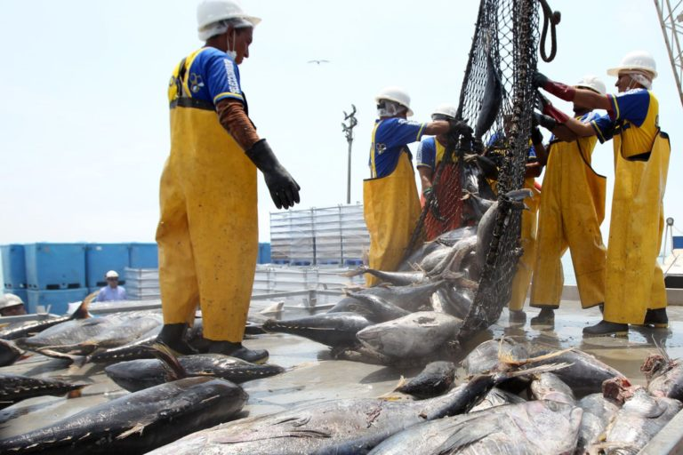 La información sobre la pesca peruana ahora es de libre acceso. Foto: Agencia Andina.