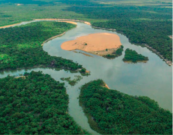 Los ríos de la selva de Venezuela es el hogar de delfines, nutrias y manatíes. Foto: Fundación Omacha.