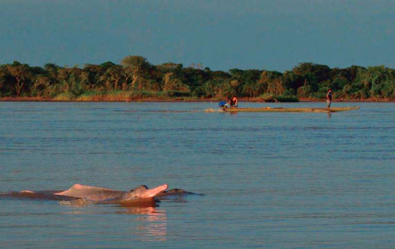 En el 2010, un grupo de científicos impulso la elaboración del Plan de Acción para la conservación de los delfines de río en Sudamérica. Foto: Fundación Omacha.